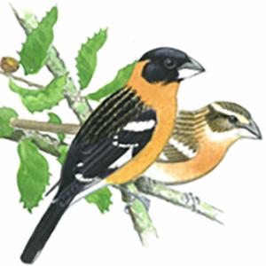 birds-e1462566810752