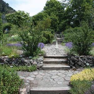 Herb-garden-in-bloom-001