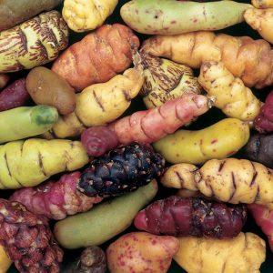 Andean crops