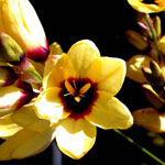 bulbs_nursery_blog