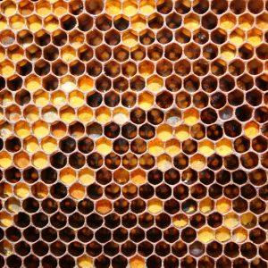 honeycomb-018