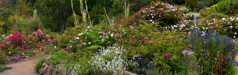 original size is 6000 1910 pixels - Berkeley Rose Garden