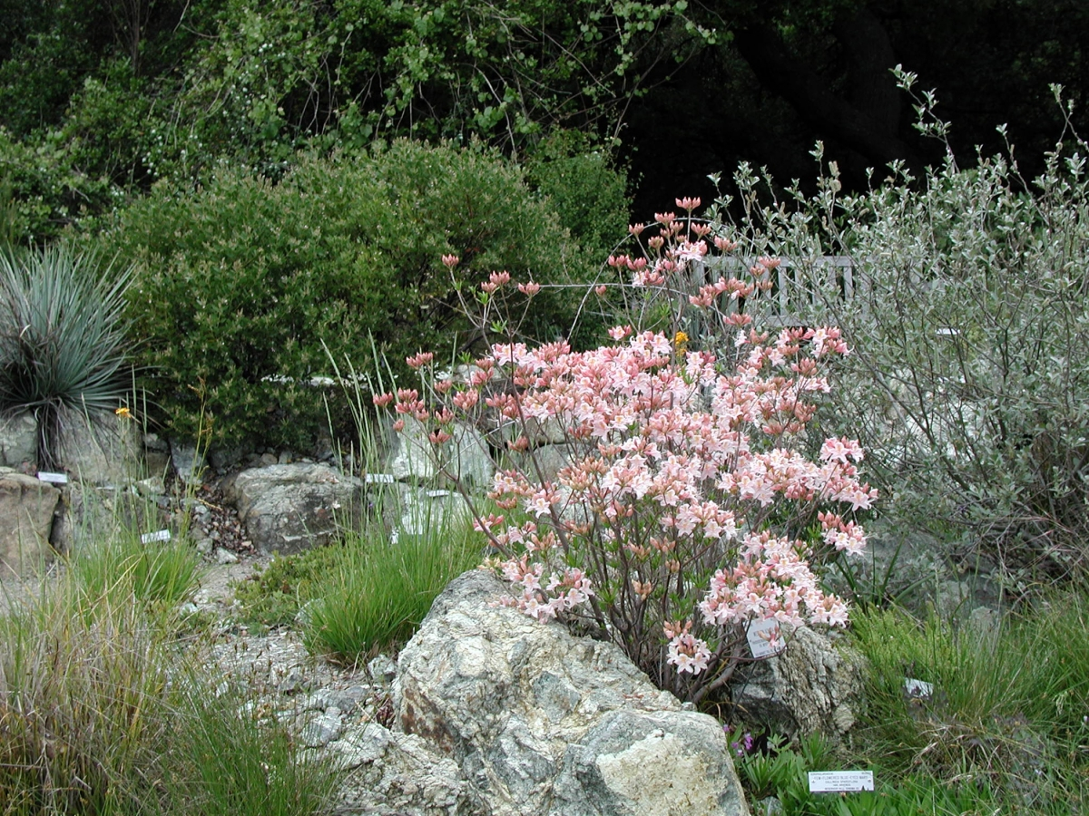 California Uc Botanical Garden