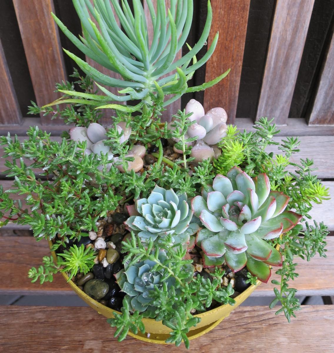Exellent Garden Shop Succulent 1 With Decor