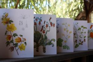 Garden Greeting Cards