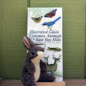 Illustrated Guide to Common Animals of the East Bay