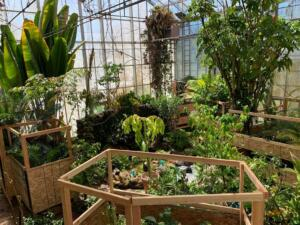 Tropical House plants with custom-built protection during construction project.